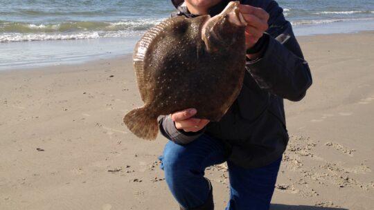 Lær at fiske: Pighvar