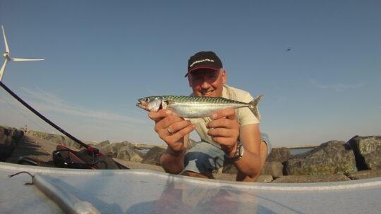Lær at fiske: Sild og makrelfiskeri
